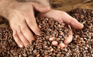 ETFS Coffee kan 52% plussen