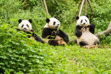 Betere vooruitzichten China en mooie kansen voor ETF